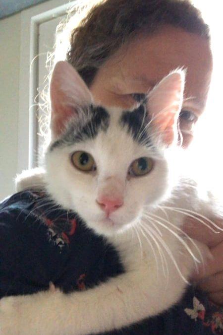 Viola – quirliges kleines Katzenmädel