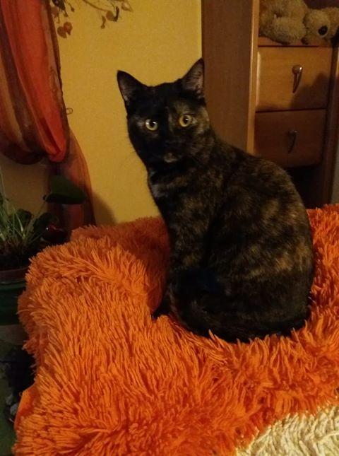 Katzenmädel Kira sucht neues Zuhause