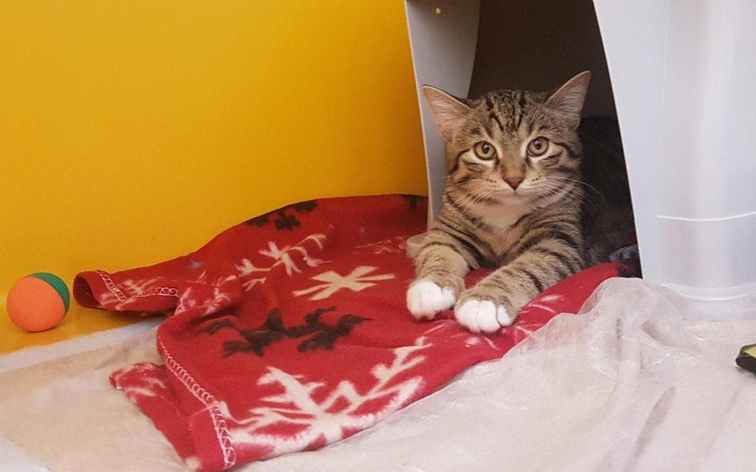 Etna – wunderschönes kleines Katzenmädel
