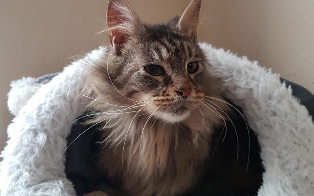 Katzenmädel Ira – die Schöne mit dem langen Haar :+)
