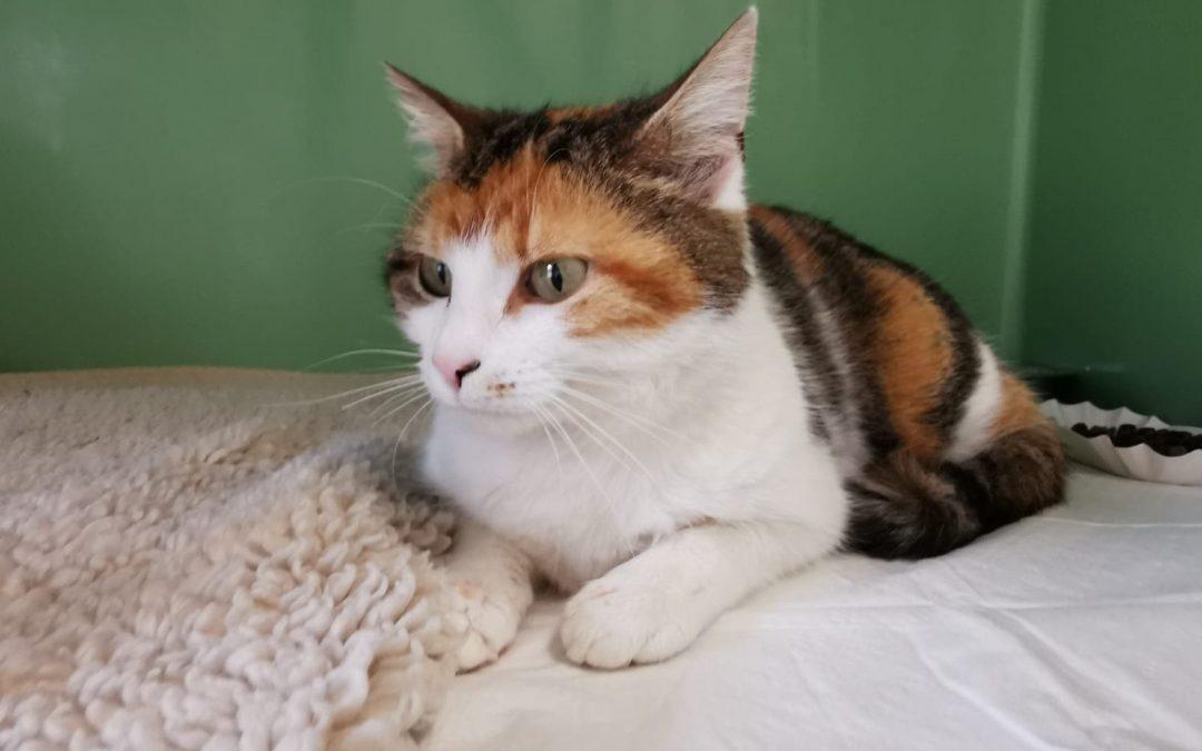 Katzenmama Sina und ihre 4 Flauschis