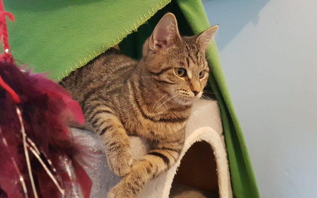 Ramona  – junges Tigermädel