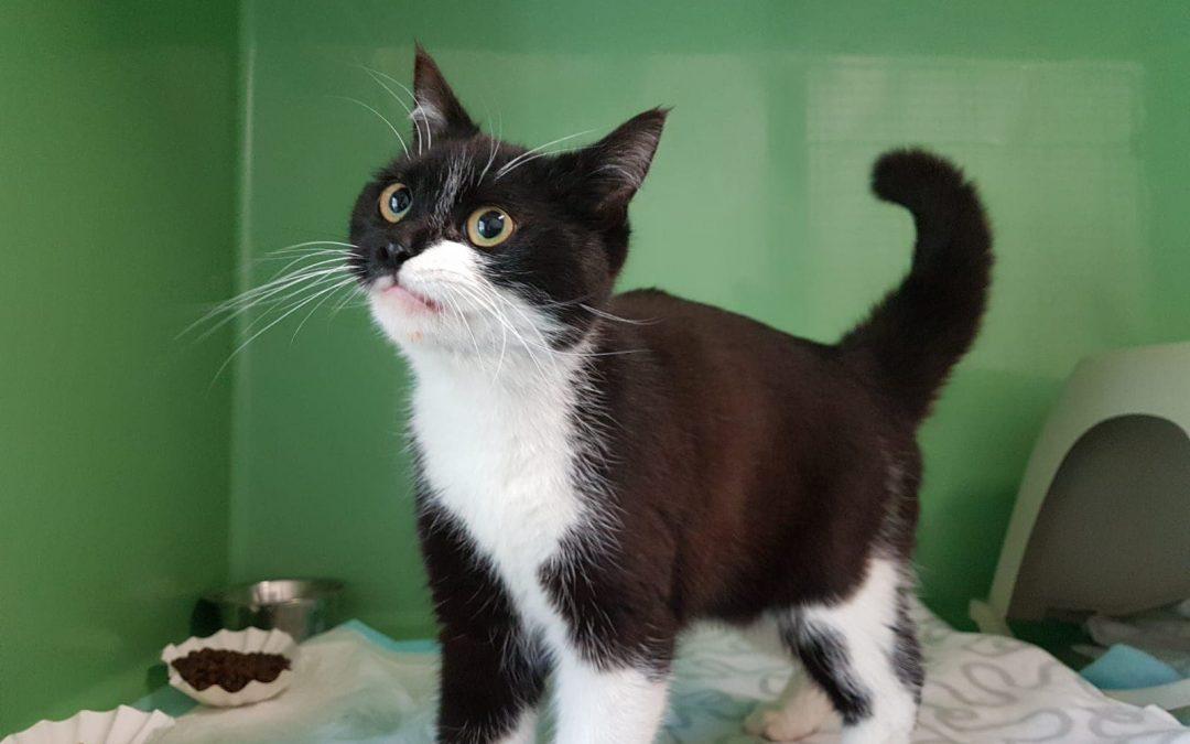 Tola – ein junges Katzenmädel