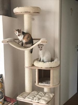 Trixie und Lucky – zwei junge Fellnasen