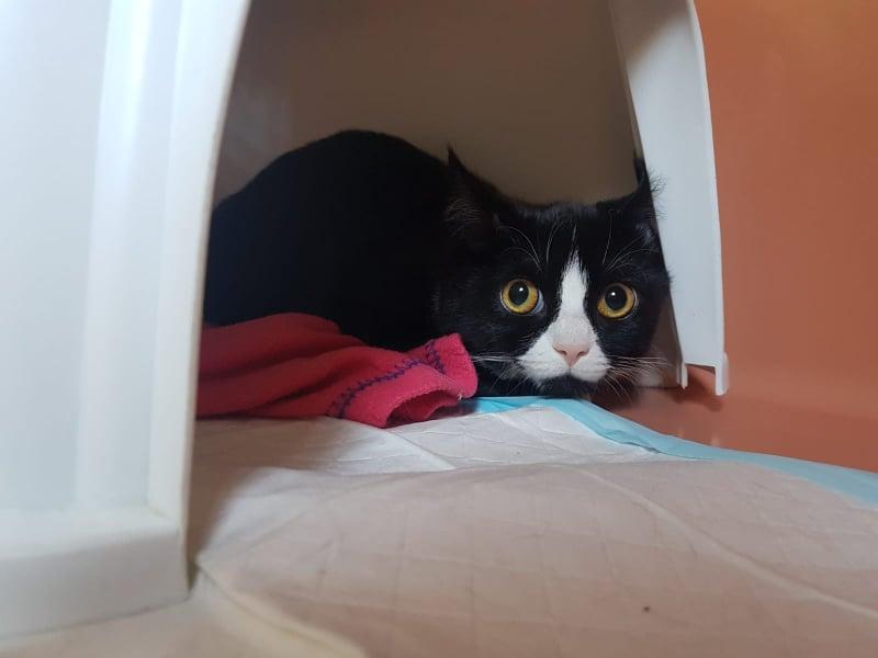 junges Katzenmädel Tamara