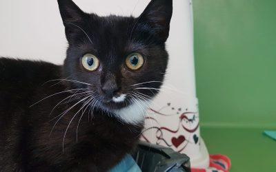 junges Katzenmädel Sabrina