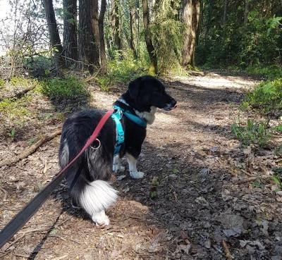Hundemädel Lia – 'Für-immer-Zuhause' gesucht