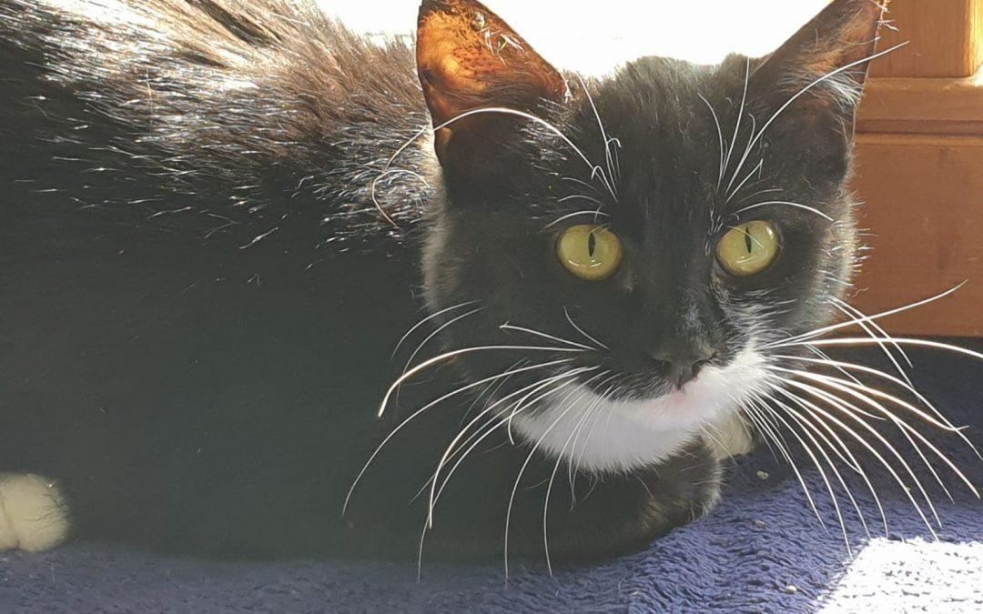 Mona – hübsches junges Katzenmädel