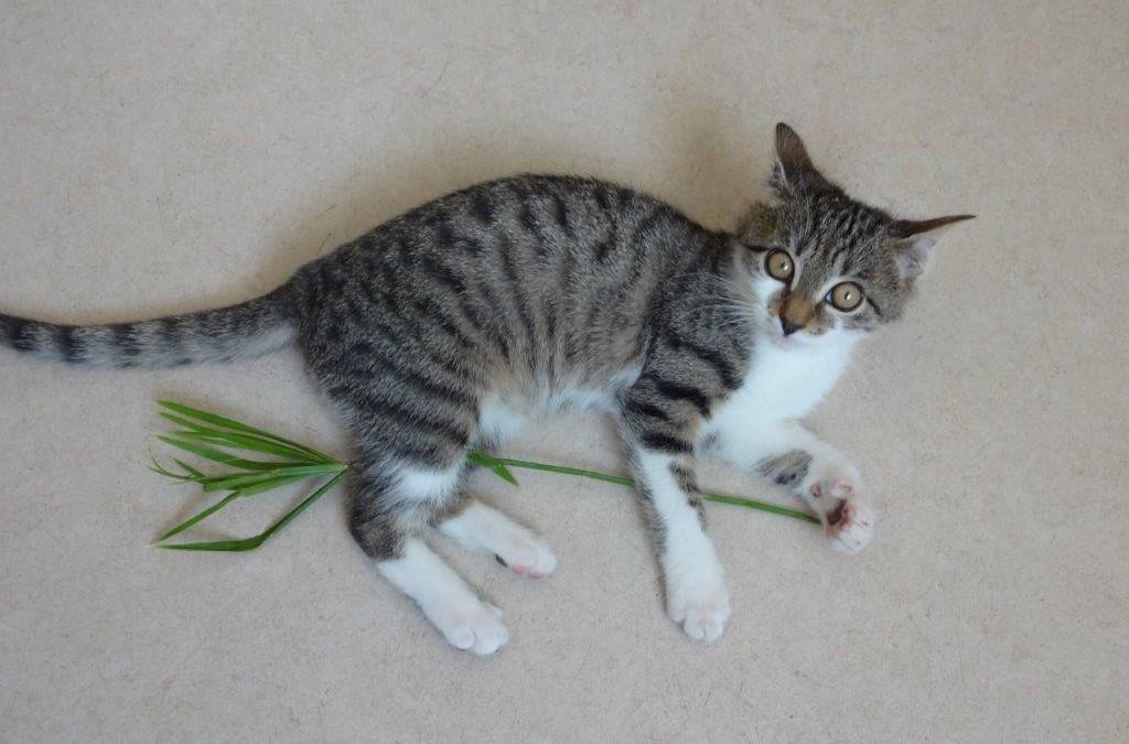 Kleine Katze 'Pippi'