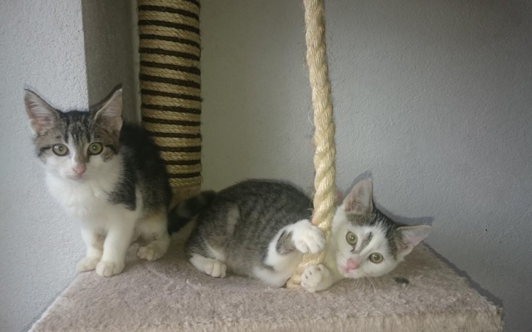Devin und Dina im neuen Zuhause