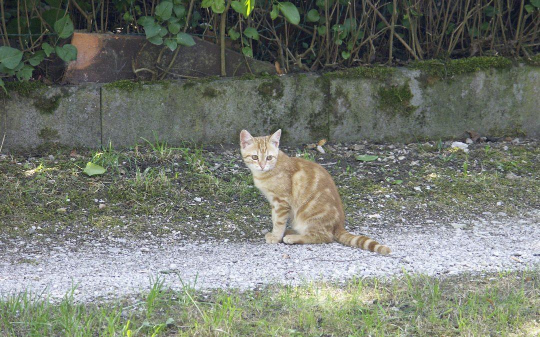 Findus – junges 'rotes' Katzenmädel sucht liebevolles Zuhause