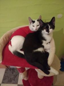 Flecky und Blacky