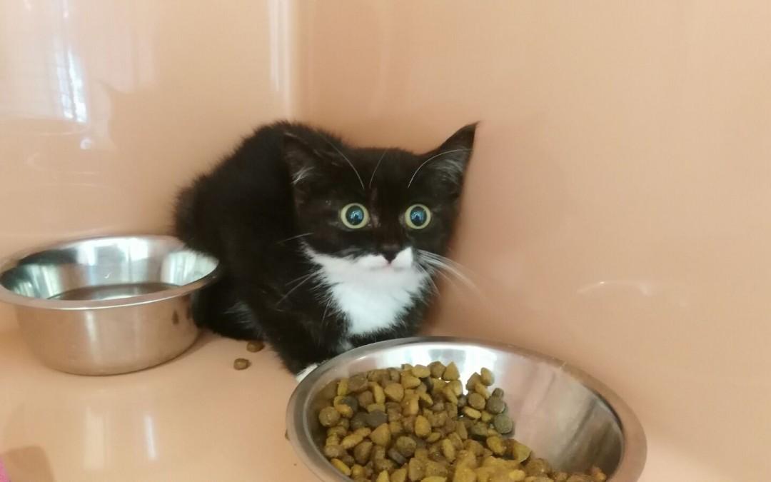 Katzenkind Moritz