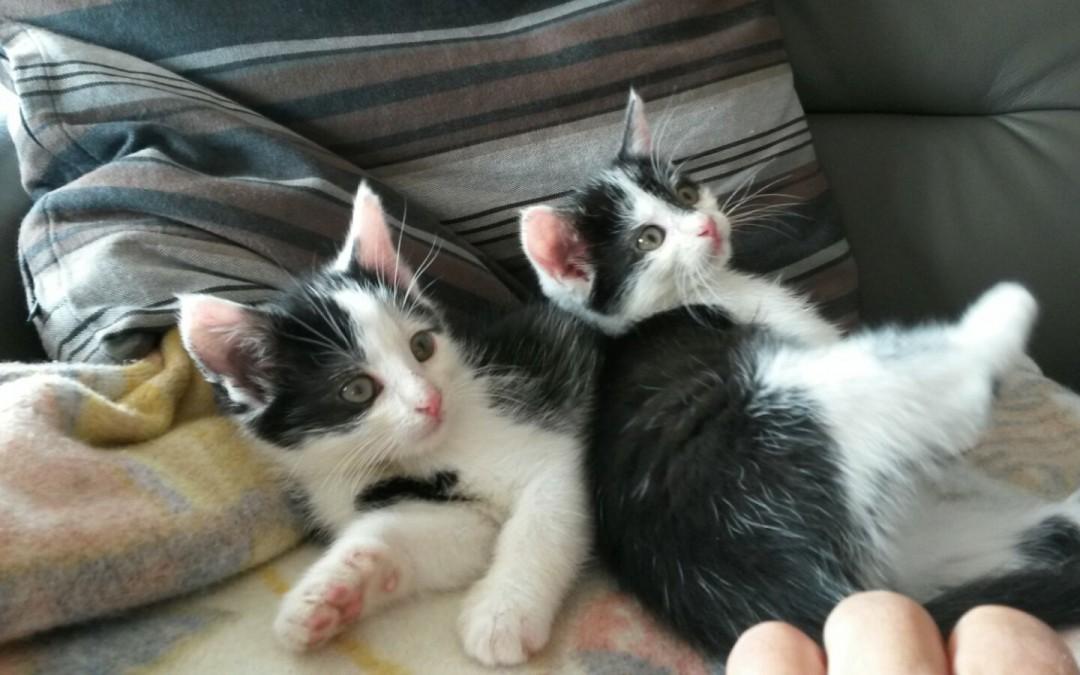 Babykatzen Paar