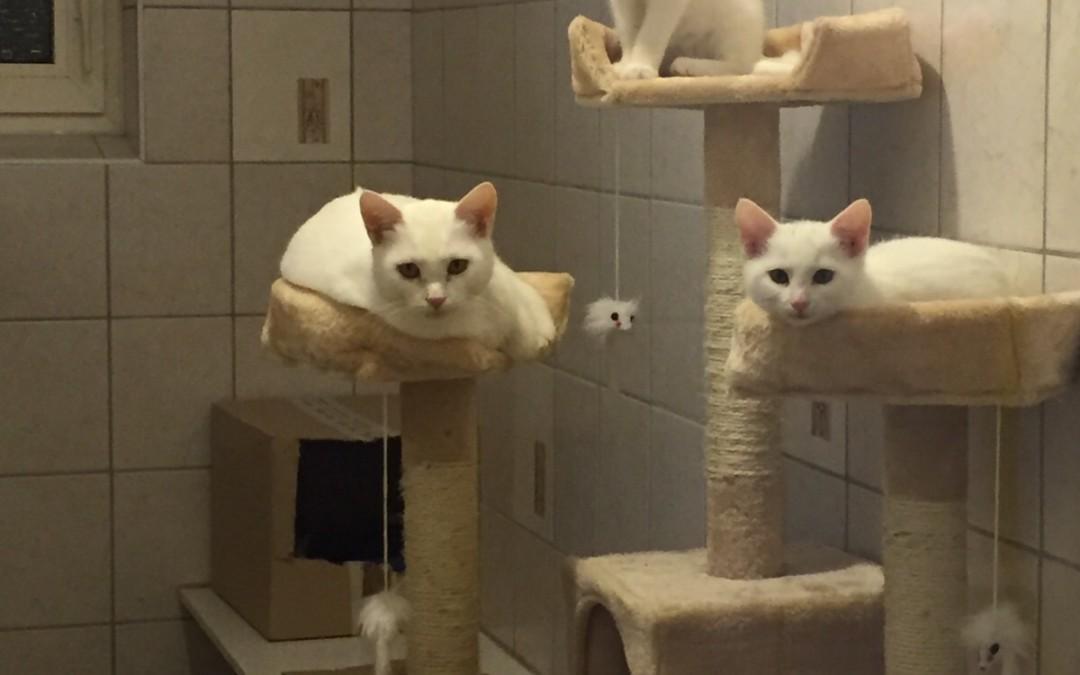Katze 'Schneeweißchen'