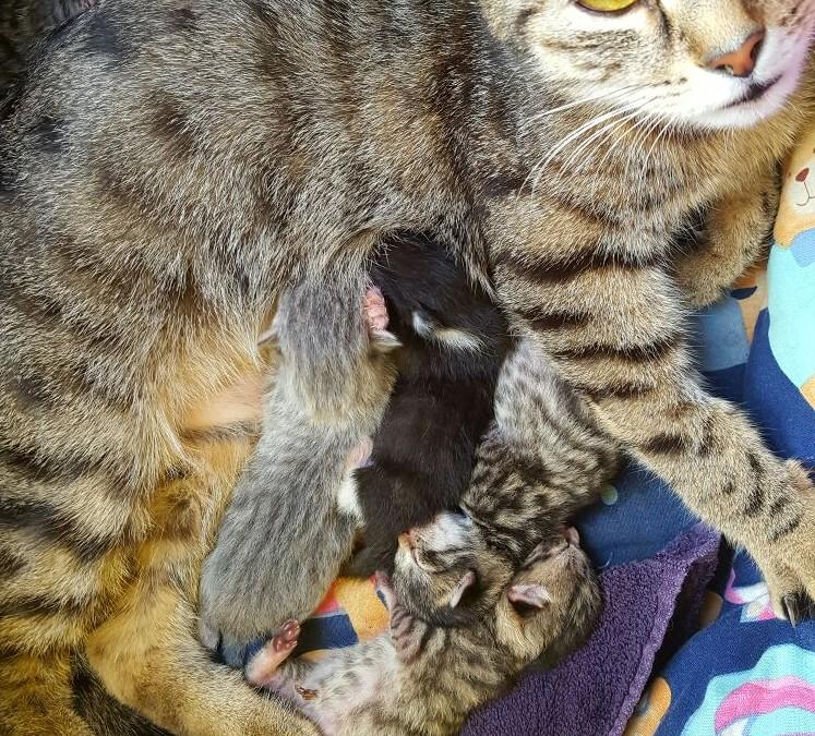 Milly – die tolle Katzenmama
