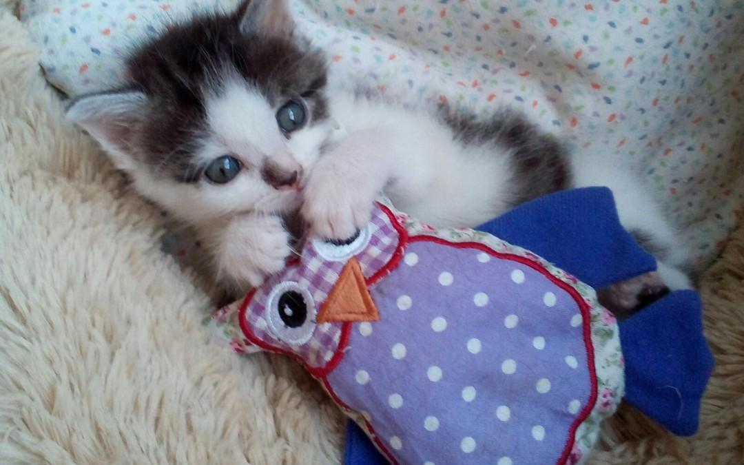 Mars und Snickers – 2 zuckersüße Katzenkinder