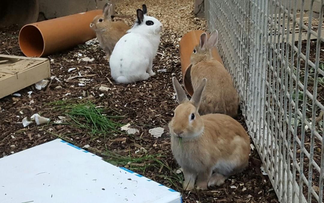 Die lustige Hasenfamilie
