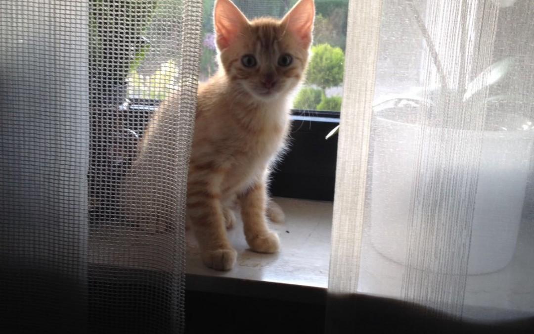 Leo – Baby von Katzenmama Lucy