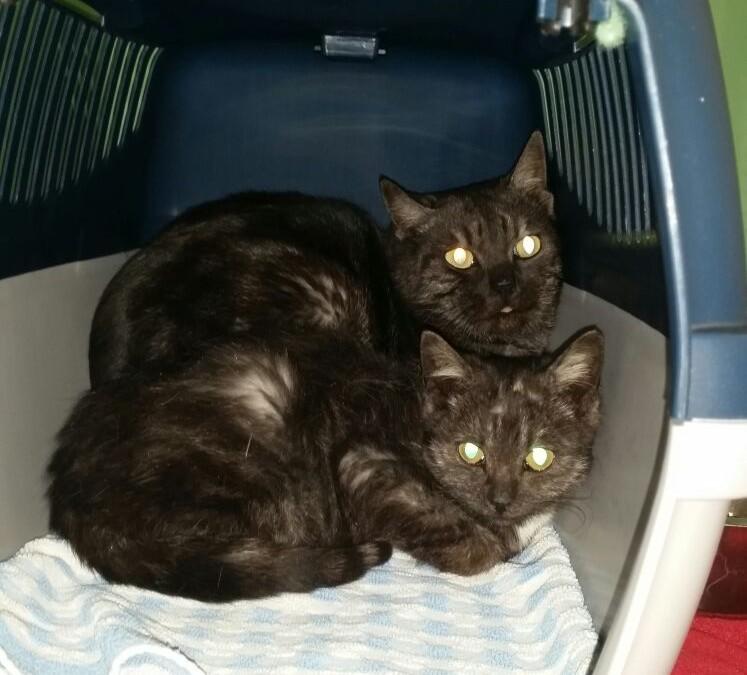 Katzenkind Marie und scheuer Freund