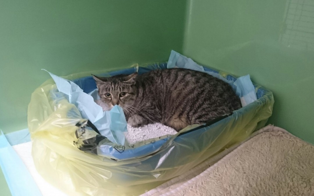 Milla, eine scheue Katze sucht Futterstelle