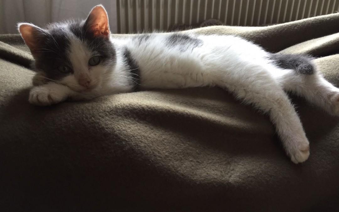 Katzenkind Emily (jetzt Greta)