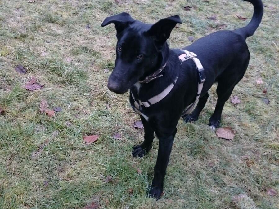 Hundemädl 'Milly' – ein verborgener Schatz