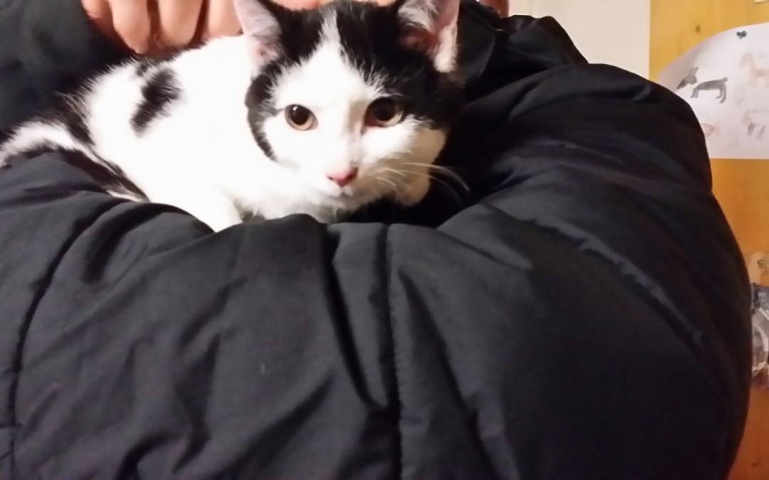 junges Katzenpaar Moppel und Knuffel