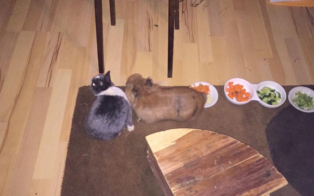 Hasenpaar Keks und Sabine
