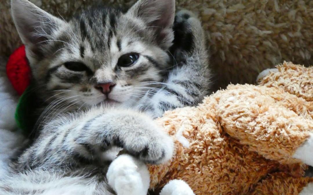 Katzenbaby Spike – kleiner (B) Engel