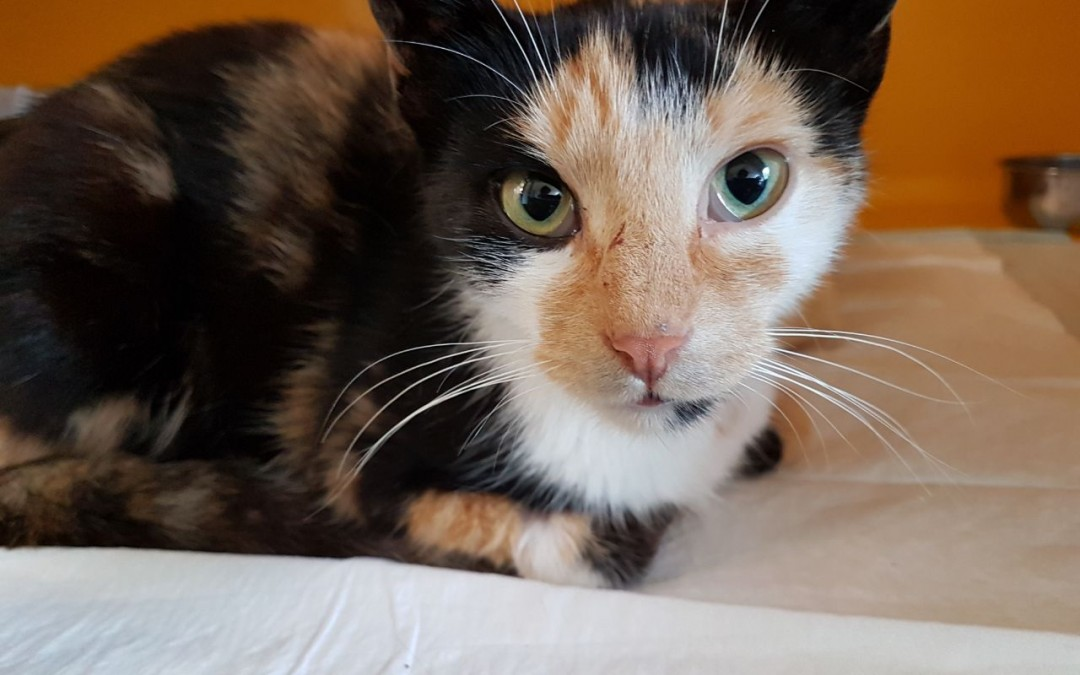 Katzenlady Camilla – streicheln erwünscht :+)