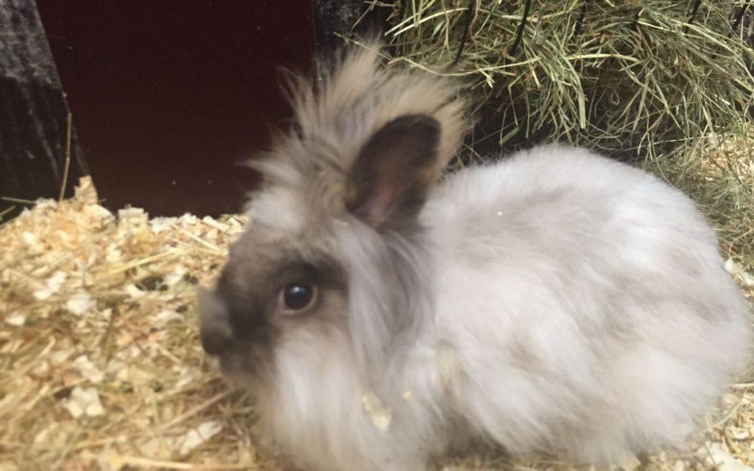 Kaninchen sind keine Oster-Geschenke!!