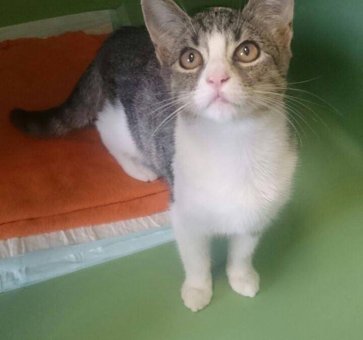 Katzenmädel Stella – Schmusekatze