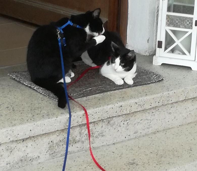 Kiki und Minnie – 2 tolle Katzenmädels