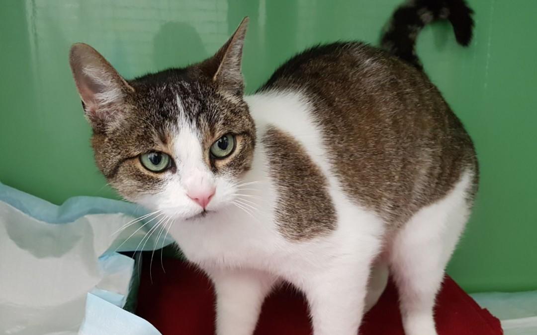 Lilly – Katzenlady aus Sulzbach-Rosenberg