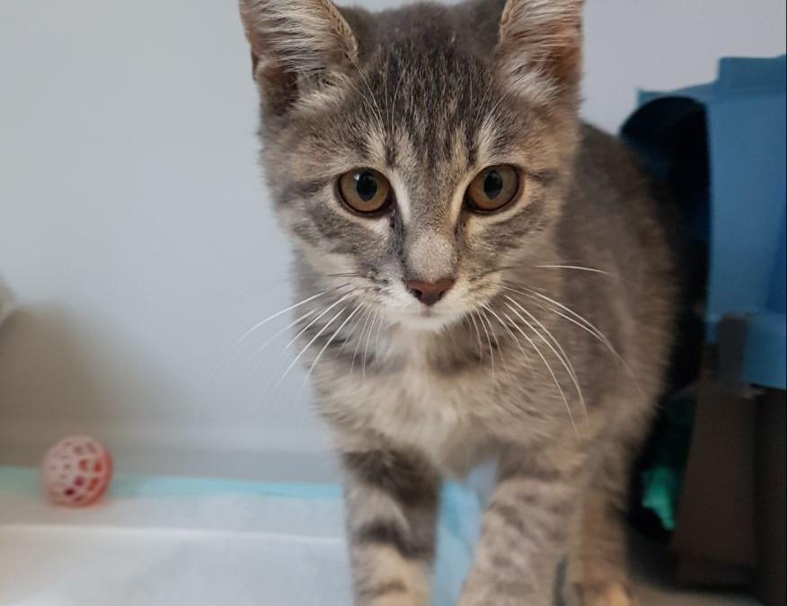 Katzenmädel Emmi