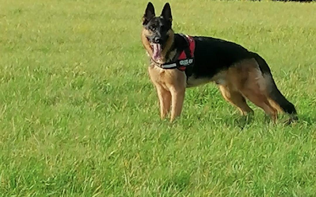Mailo – nicht nur für Schäferhund Liebhaber ein toller Kumpel !