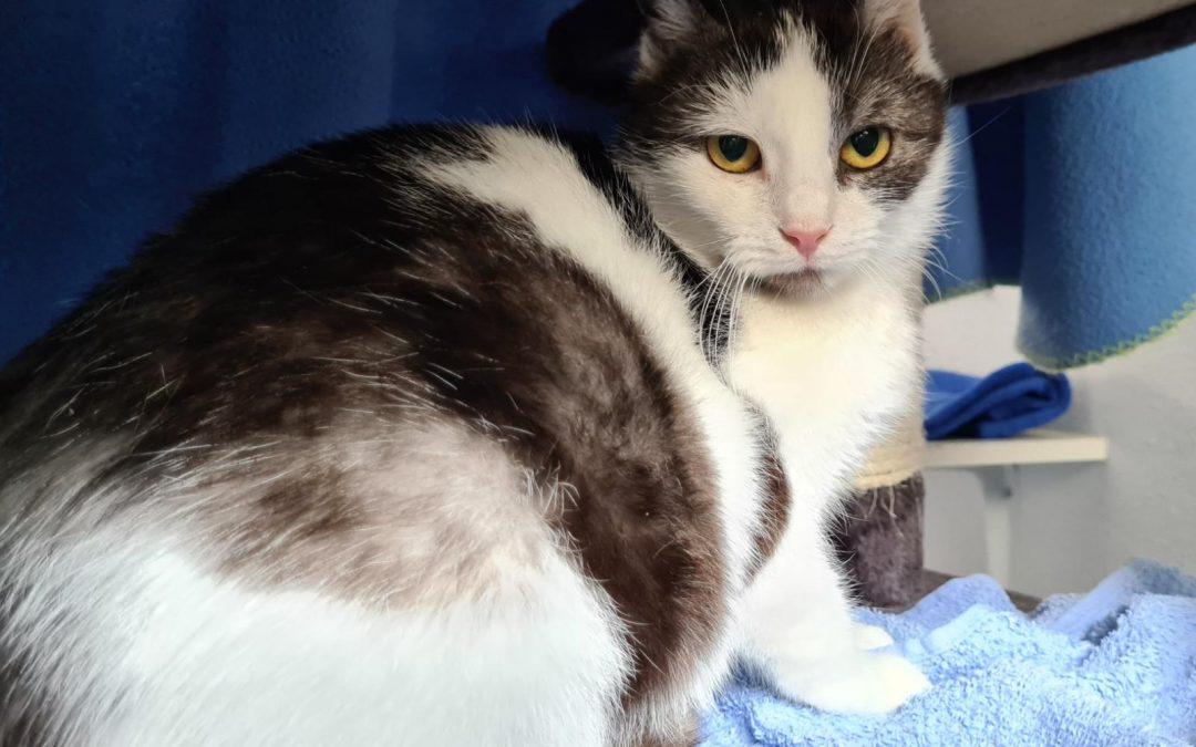 Roxy – tolle Katzenmama für ihr Katzenkinder Duo