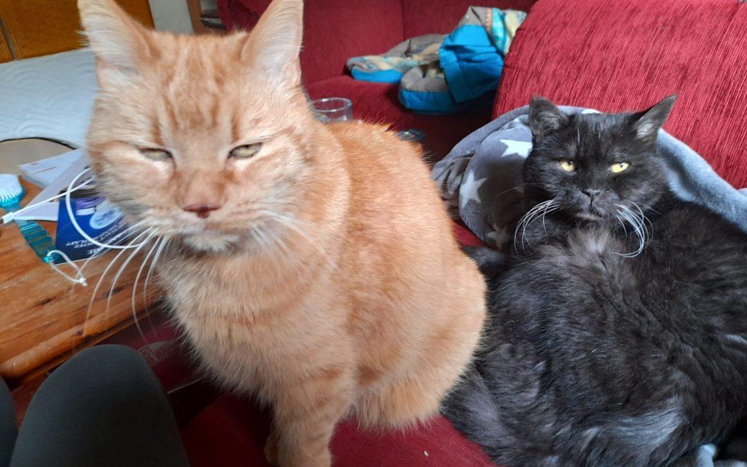 Felix und Moritz – zwei  Katzen-Opas suchen liebevolles 'letztes Zuhause'