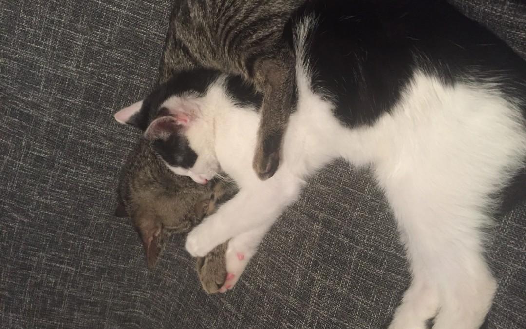 Baby von Emma – kleines Katzenmädchen