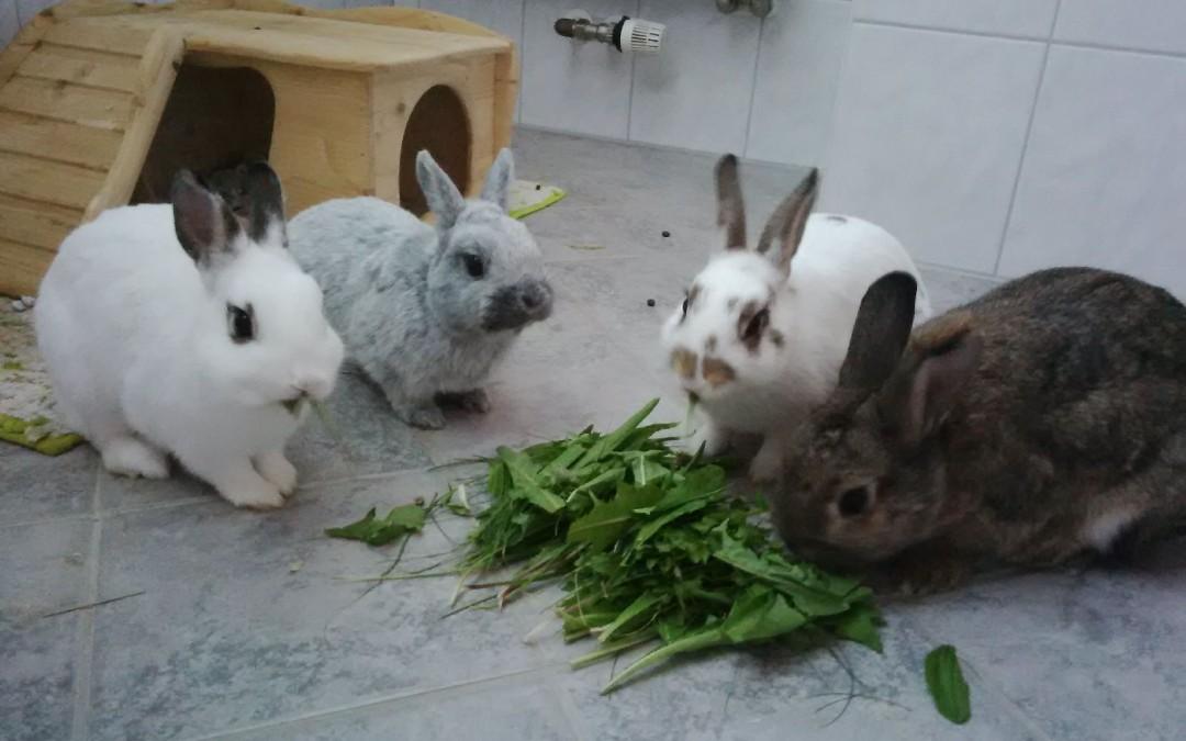 Oskar und Mogli – 2 Hasen in ihrer neuen Familie
