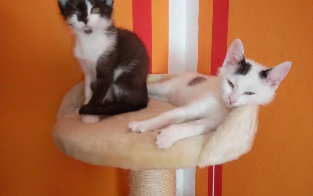 Blacky und Flecky – Babies von Katzenmama Evi