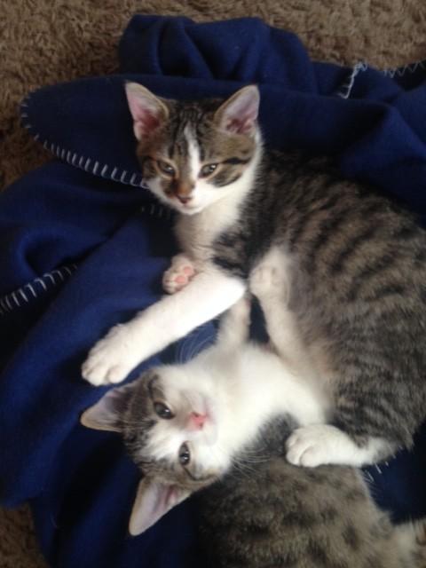 Flips und Feli – zwei Kinder von Katzenmama Evi