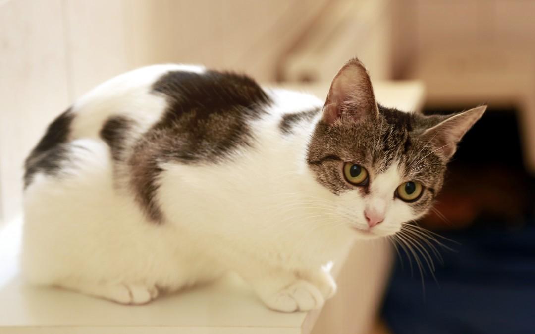 Kleine Katzenlady Alina