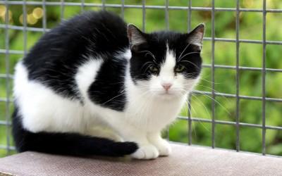 Katzenmädchen Lisa