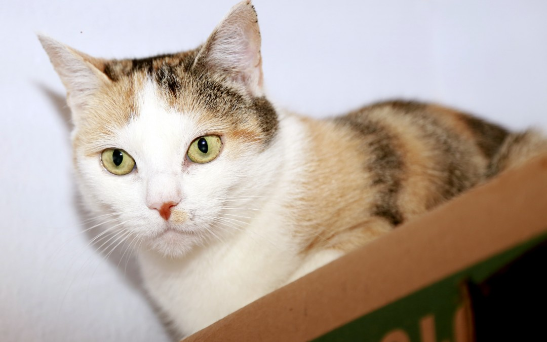 Katzenlady Nelly