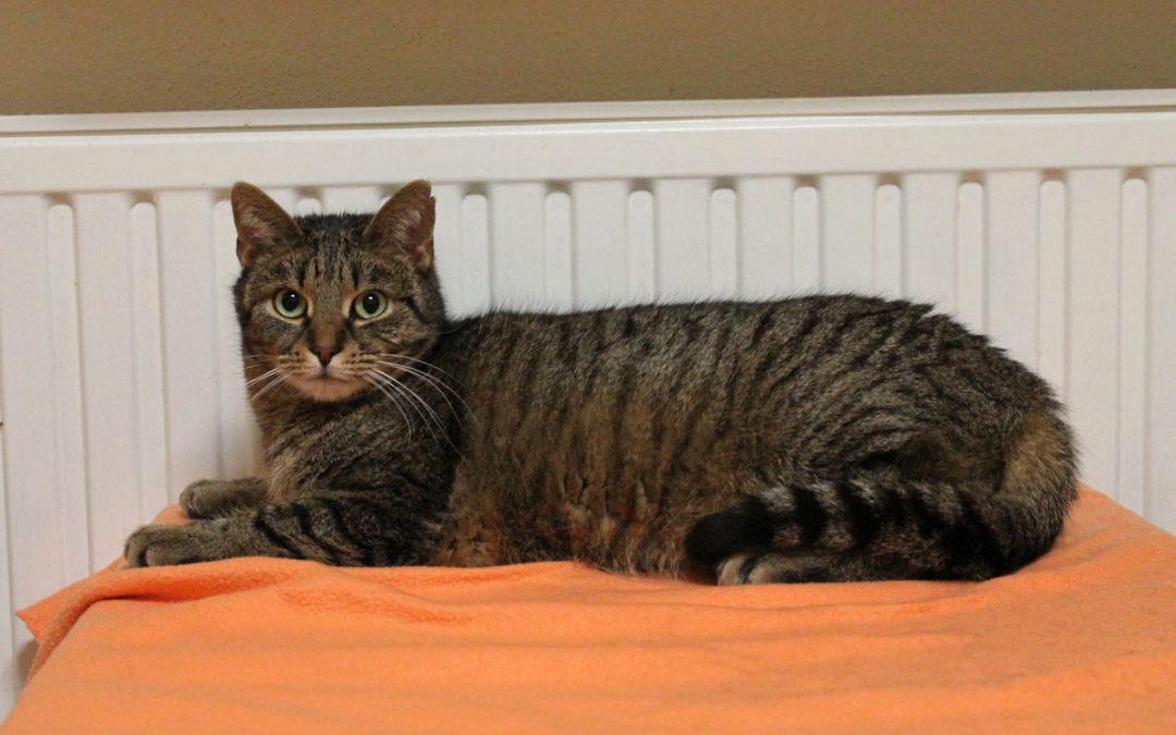 schüchterne Tiger Lilly  wünscht sich ein Zuhause