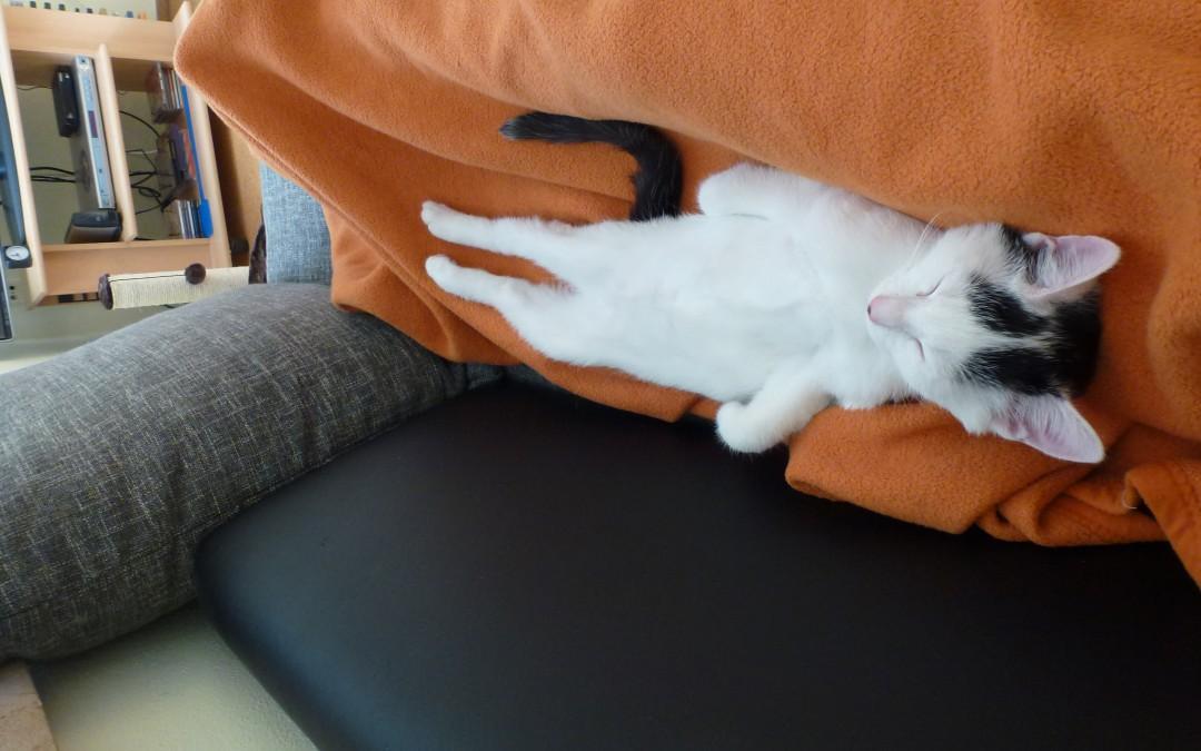 Micky – Baby von Katzenmama Evi
