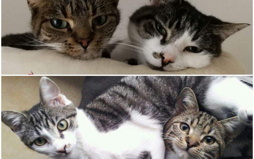 Milly und Lucy – zwei 'ältere Schwestern' suchen neue Familie