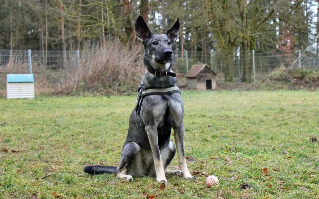Teona – junges Hundemädel